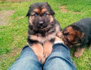 condroprotectores para cachorros
