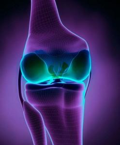 que es el cartilago articular